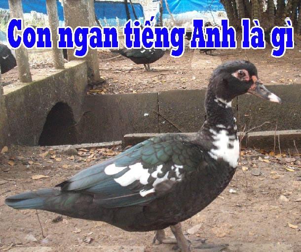 Photo of Con ngan tiếng Anh là gì